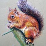squirrel-copy-small.jpg